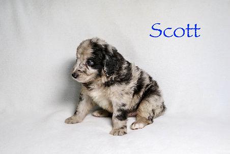 Scott5n.jpg