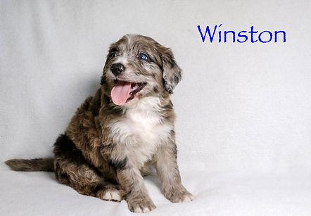 Winston5n.jpg