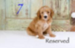 1L0A8371-Edit copy.jpg