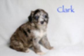 Clark5n.jpg
