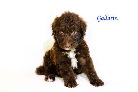 Gallatin6.jpg