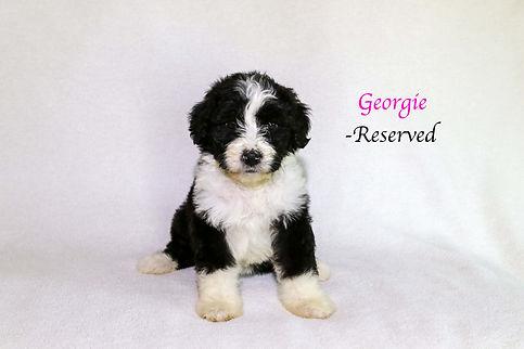 Georgie6.jpg