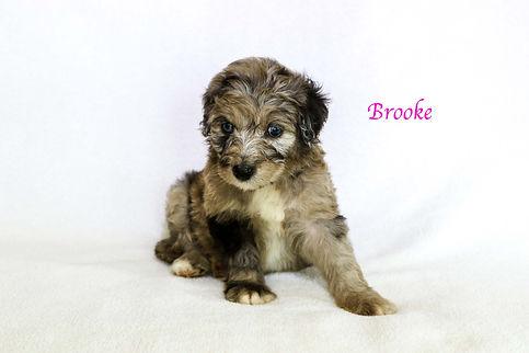 Brooke6.jpg