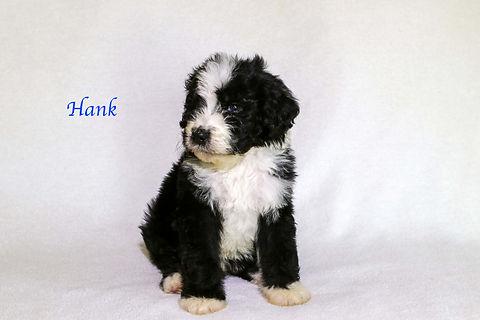 Hank6.jpg