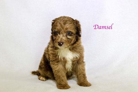 Damsel6.jpg