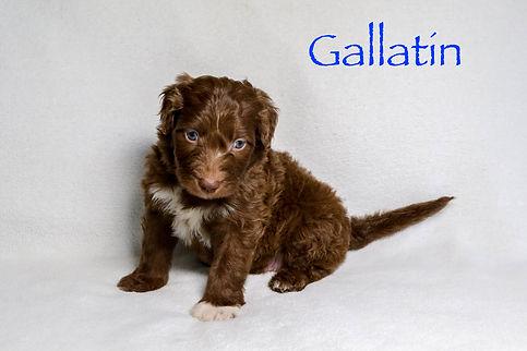 Gallatin5n.jpg