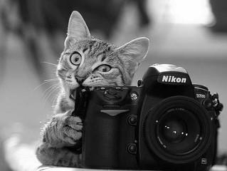 Cessione del negativo fotografico e diritto d'autore