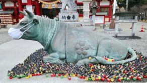 牛をなでる!! 初詣@名古屋三大天神 上野天満宮