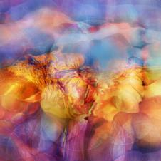 Noosphere Bloom