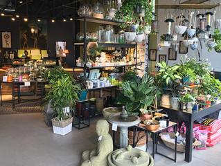 Best Local Gardening Shops
