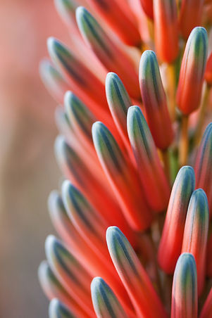 hand-blossom-plant-flower-petal-bloom-99