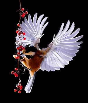 nature-bird-wing-flower-animal-isolated-