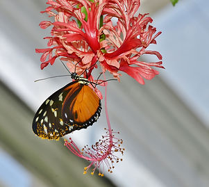 nature-branch-flower-petal-summer-insect