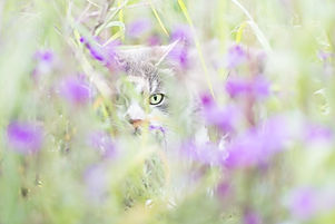 cat-nature-animal-green-art-colour-14341