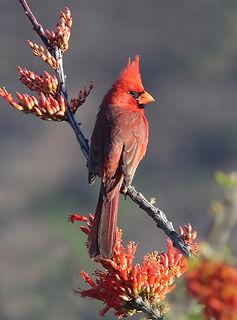nature-branch-bird-flower-male-wildlife-