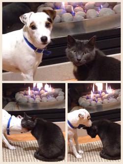 buddy and Dewey.jpg