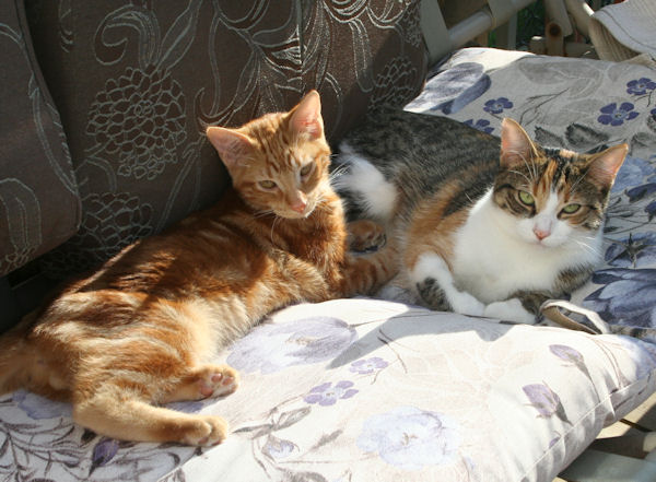 cats milo and lucy.jpg