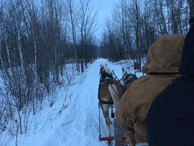 Un attelage de chevaux en hiver