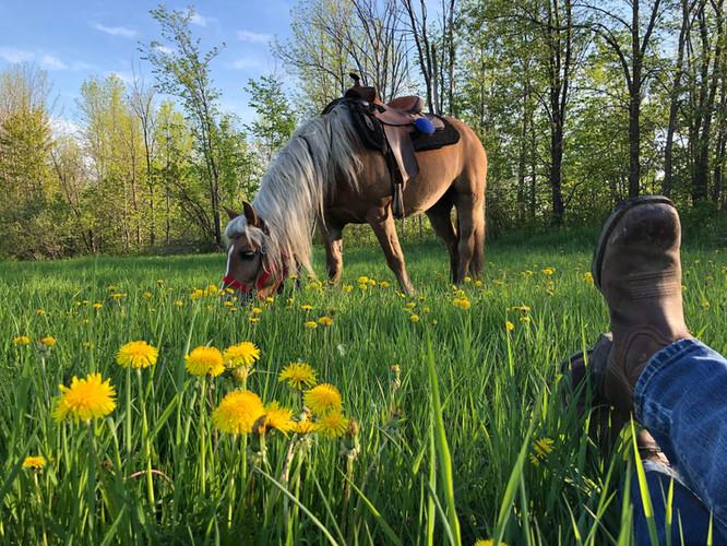 Un cavalier et son cheval dans le gazon