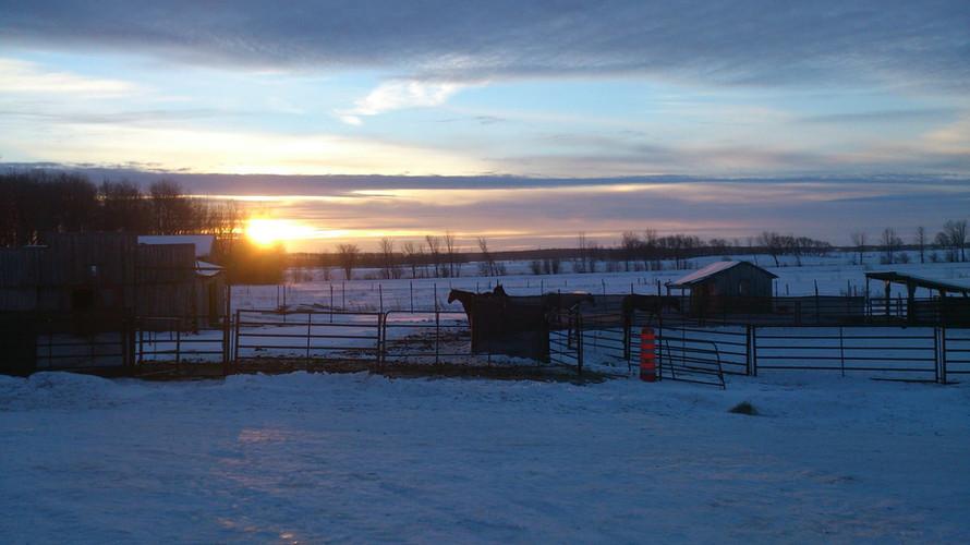 Les chevaux du Far-West dehors en hiver