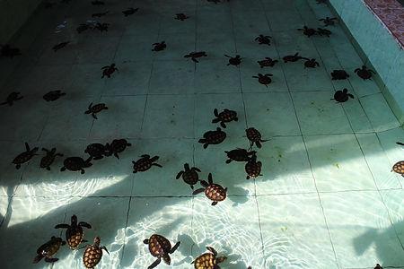 Turtle Sanctuary Gili Meno