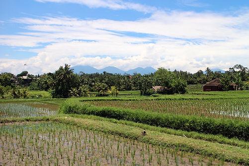 Inför din resa till Bali