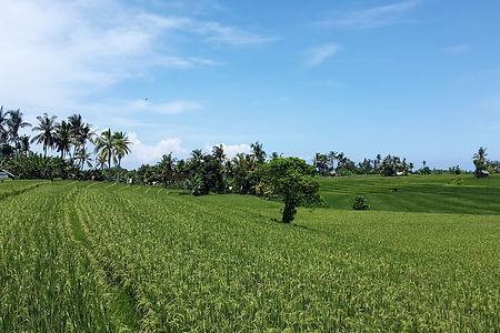 Upplev det allra bästa av Indonesien