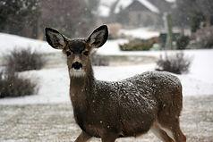 deer-1210019_1920.jpg