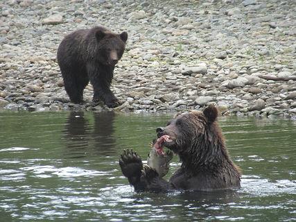 black-bear-50293_1280.jpg