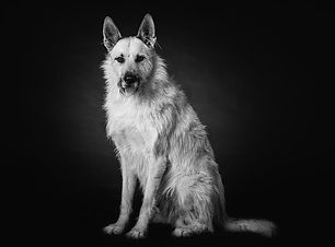 Hundefotos Essen.jpg