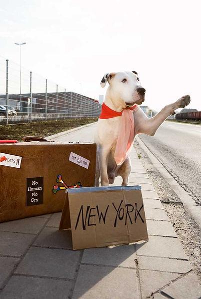 Hundefotos Essen-.jpg