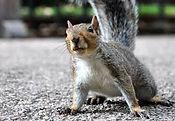 Squirrels .jpeg