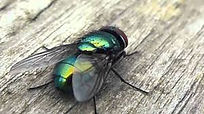 greenbottle.jpeg