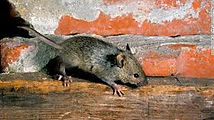 mice.jpeg