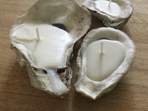 Oyster Shell Candles, Set of 3