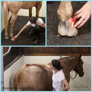Things to consider when rehabbing a horse.