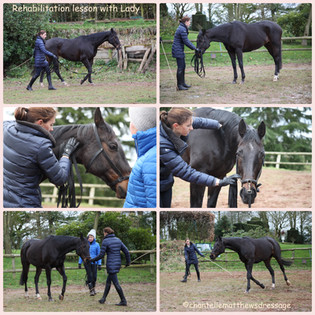 Helping Lady Through Her Resistances: A Lesson in Rehabbing Horses.