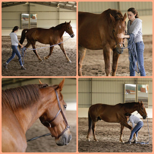 Teaching a rescue horse to find his confidence and trust again