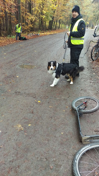 Hund Ludwig
