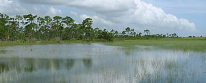 savannas-preserve.jpg