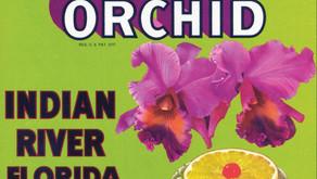 Indian River Citrus Label Driving Tour