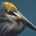 pelican-island.jpg