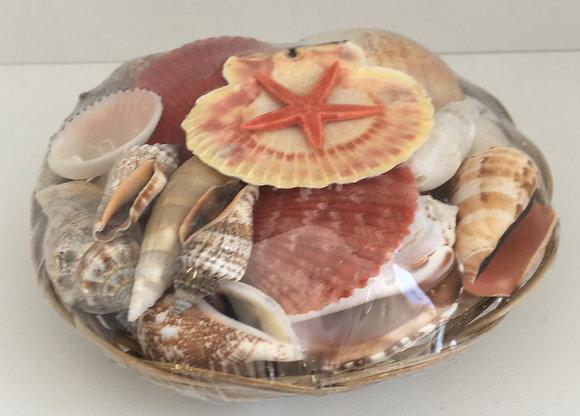 Sea Shells Basket