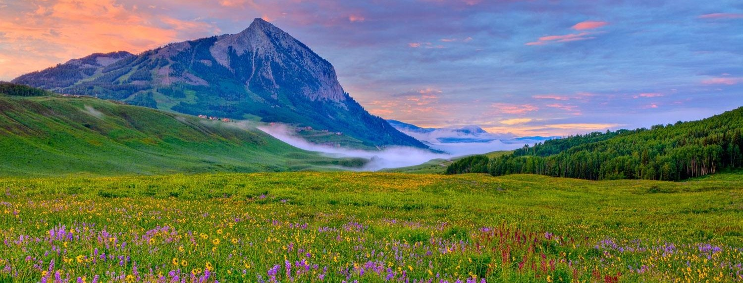 Field_of_Wildflowers_Crested_Butte_Area_