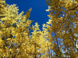 Crested Butte Colorado fall