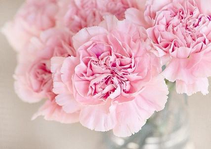 carnation-1325012_640.jpg