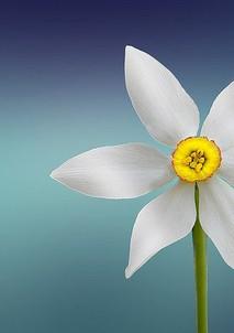flower-729513_640.jpg