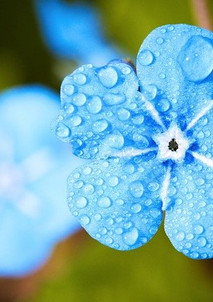 blue-flower-2197679_640.jpg
