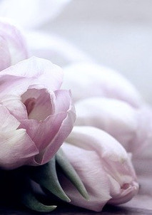 tulips-4072214_640.jpg