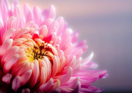 flower-202483_640.jpg